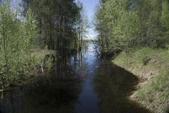 Framkallning för härlig sikt för skogflod royaltyfria foton