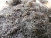 Frammenti di capelli sul pavimento di un negozio di barbiere fotografia stock libera da diritti
