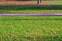 Frammento del sentiero per pedoni nel parco fotografia stock libera da diritti