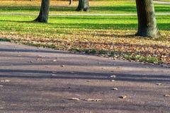 Frammento della strada nel parco fotografie stock libere da diritti