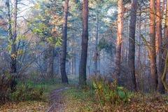 Frammento delle conifere e della foresta decidua nella mattina di autunno immagine stock
