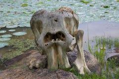 Frammento dello scheletro di un animale Fotografie Stock Libere da Diritti