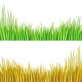 Frammento di un'erba verde Fotografia Stock Libera da Diritti