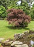 Frammento di un giardino giapponese - nella priorità alta un percorso di pietra a Fotografia Stock Libera da Diritti