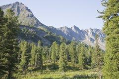 Frammento di una cresta della montagna. Immagine Stock