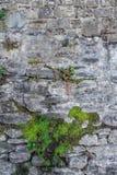Frammento di vecchia parete di pietra Fotografia Stock Libera da Diritti