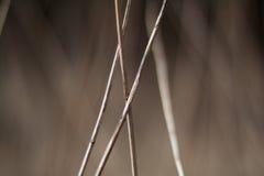 Frammento grigio dell'erba Fotografia Stock Libera da Diritti