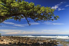 Framming trees of the sea Royalty Free Stock Photos