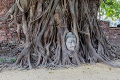 Framsida av Buddha i ett Banyanträd Royaltyfri Fotografi
