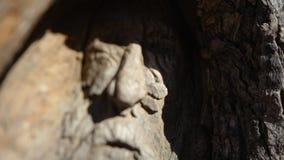 Framsida av en åldring som inristas på träd stock video