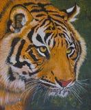 Framsida av en tiger Arkivfoton