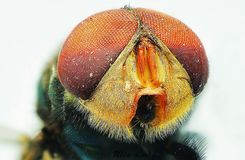 Framsida av flugor royaltyfri fotografi