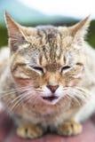 framsida av katten Royaltyfri Bild