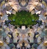 Framsida av skogen - framsidan från mossa med docka` s synar arkivfoton