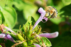 Framsida mycket av blomman Arkivfoto