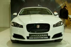Framsidamaskering Jaguar Royaltyfri Fotografi