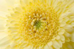Framsidan av blomman Arkivbild