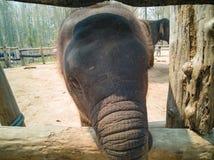Framsidan av cutie behandla som ett barn elefanten royaltyfri fotografi