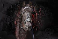 Framsidan av en älskvärd Freesian häst Stående textur royaltyfri bild