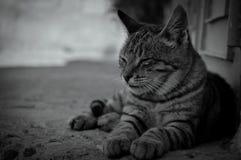 Framsidan av katten royaltyfria foton