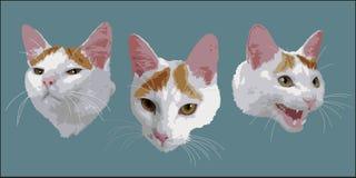 Framsidor av en katt arkivfoto