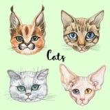 Framsidor av katter av olika avel Uppsättning vektor vattenfärg vektor illustrationer