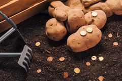 Framst?llning av vinst fr?n organiskt lantbruk av potatisen arkivfoto