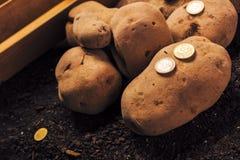 Framst?llning av vinst fr?n organiskt lantbruk av potatisen arkivfoton