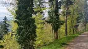 França, floresta perto de Kenisberg, estrada na floresta, Alsácia fotografia de stock royalty free