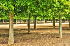 França, a propriedade de Marie Antoinette no parc do Pa de Versalhes Fotografia de Stock Royalty Free