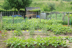 France, allotment garden in Les Mureaux Royalty Free Stock Photos