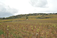 France Beaune Burgundy vineyards Stock Photos