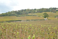 France Beaune Burgundy vineyards Royalty Free Stock Photography