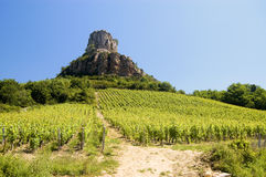 France Burgundy Vineyard with rock. From this vineyard (and many others) in France come the famous Burgundy Wines.Typical view of a vineyard. In the back we see Stock Photos