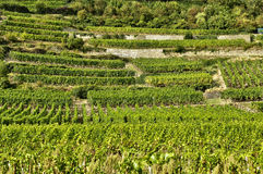 France, famous vineyard of Kaysersberg in Alsace Royalty Free Stock Photography