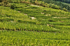 France, famous vineyard of Kaysersberg in Alsace Stock Photo