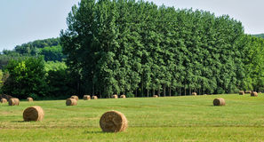 France, field in La Roque Gageac Royalty Free Stock Image
