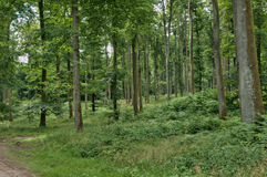 France, forest of Lyons la Foret, in Normandie Royalty Free Stock Image