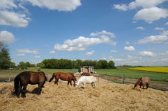 France, horses in a field in Boisemont Royalty Free Stock Photo
