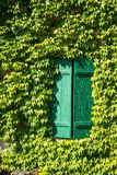 France, ivy covered house wall with green wood shutters. Ivy covered house exterior with green shutters, France Royalty Free Stock Photography