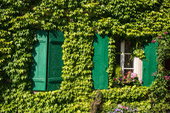 France, ivy covered house wall with green wood shutters Stock Photo