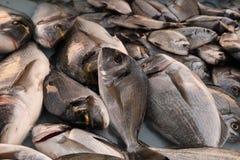 France, Marseille. Fresh fish at the fish market Royalty Free Stock Image