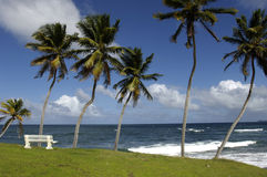 France, Martinique, beach Royalty Free Stock Photo