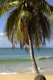 France, Martinique, Sainte Anne Stock Photography