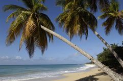 France, Martinique, Sainte Anne Royalty Free Stock Photography