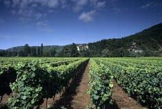 France midi pyrenees river lot. Europe france midi pyrenees vineyards valley of the river lot Stock Photo