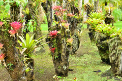 France, the picturesque garden of Balata in Martinique Royalty Free Stock Photos