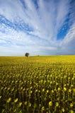 France - Provence imagem de stock