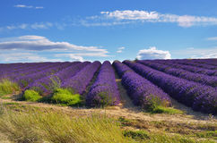 france provence Royaltyfria Bilder