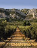 France provence bouches du rhone provence the alpi Royalty Free Stock Photos